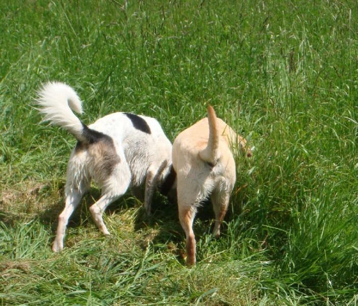 Harris und Loui